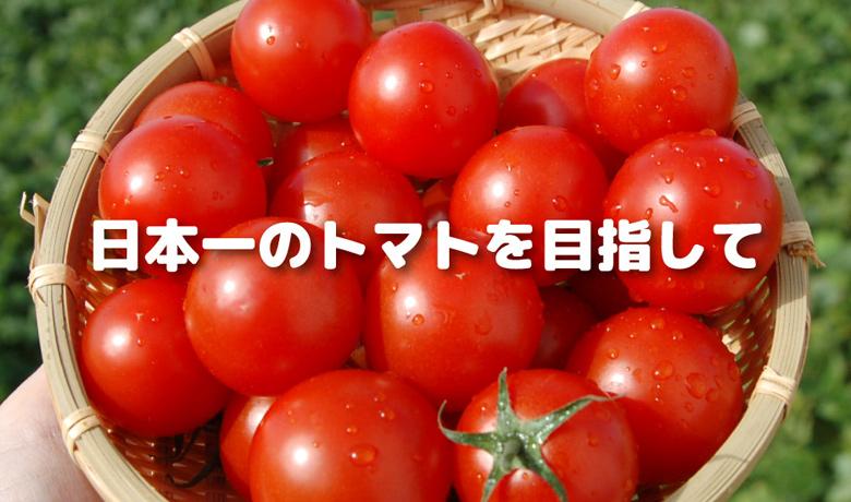 日本一のトマトを目指して