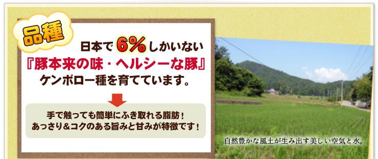 日本で6%しかいないケンボロー種